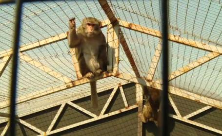 Animalele sălbatice găsite la Nuțu Cămătaru vor ajunge la zoo. Demersurile specialiștilor