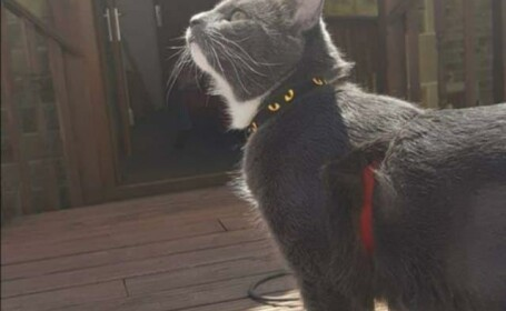 O pisică a ajutat poliția să prindă un hoț. Ce a făcut când l-a văzut în casă