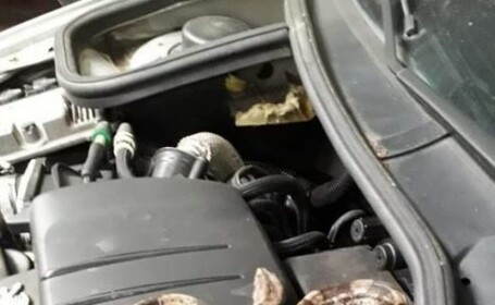 Descoperirea șocantă făcută de un mecanic din Franța sub capota unei mașini