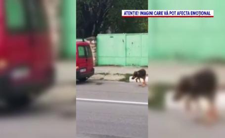 Bărbat de 70 de ani, filmat când leagă un câine de mașină și îl târăște zeci de metri
