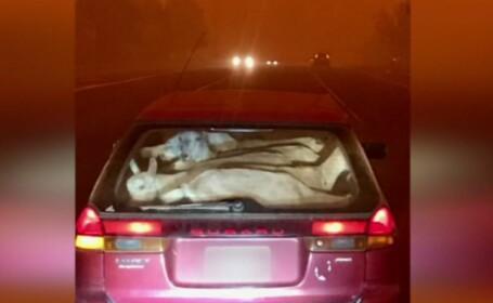 Situație dificilă pentru o femeie din SUA: și-a salvat caprele din calea flăcărilor