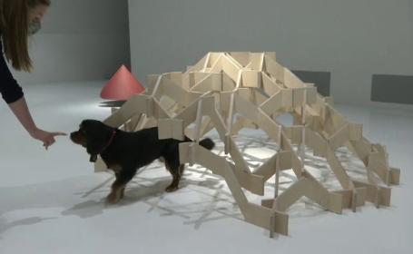 Expozitie arhitecturala pentru caini