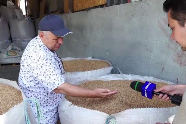"""Cea mai bună producţie de grâu din ultimii 10 ani, în România. """"Anul acesta vom mânca o pâine mai bună"""""""