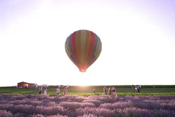 Pe un lan de lavandă din Mureș turiștii pot admira peisajul din balonul cu aer cald