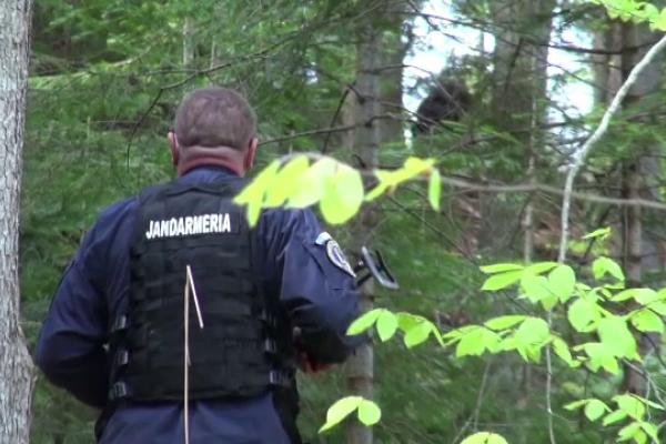 Urs prins în capcană de braconieri, în Bacău. Blana poate ajunge până la 4.000 de euro