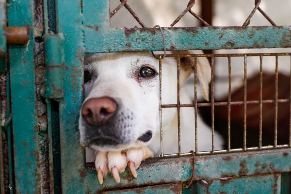 Câine în adăpost