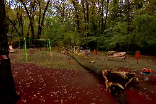 Mii de copaci cad în fiecare an peste case și mașini. Autoritățile se arată complet dezinteresate