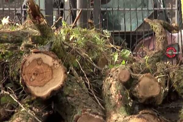 S-au scumpit lemnele de foc și sunt din ce în ce mai greu de găsit. La magazine s-au făcut liste de așteptare