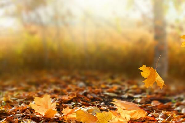 Vremea, 25 Octombrie. Vreme frumoasă și cer senin în cea mai mare parte a țării