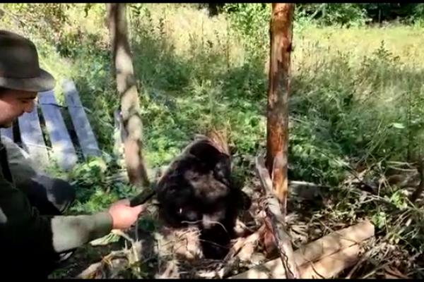 Un urs a rămas captiv într-un gard. Animalul a fost eliberat după ce a fost tranchilizat