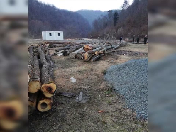 Doi bărbați au defișat o bucată de pădure
