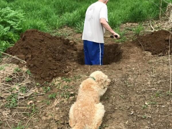 """Momentul emoționant în care un câine vede când i se sapă """"mormântul"""
