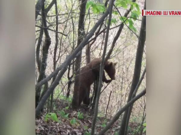Gestul unui bărbat care a ajuns într-o pădure din Vrancea. A sunat imediat la 112