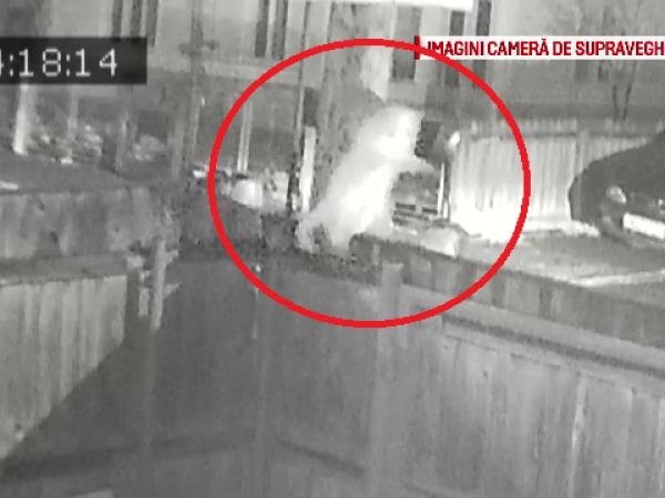 Pisica furata de un taximetrist