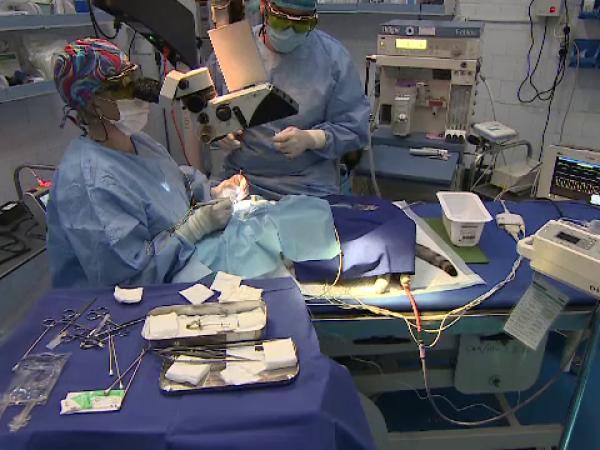 Noul Spital Veterinar din București este gata, după 10 ani. Câți bani s-au investit