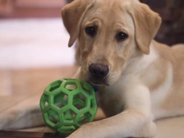 Suma plătită de o familie pentru a-și clona câinele decedat