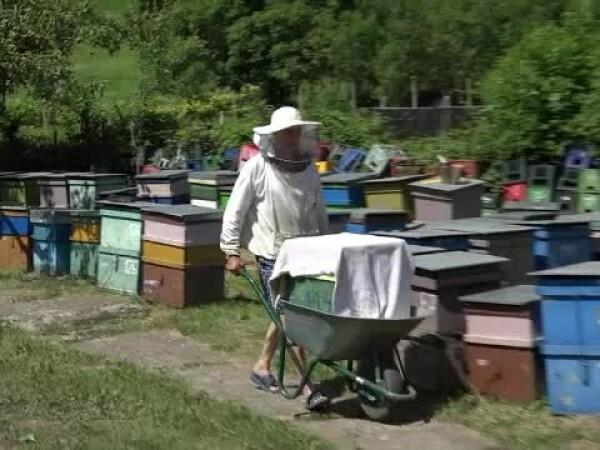 miere apicultori