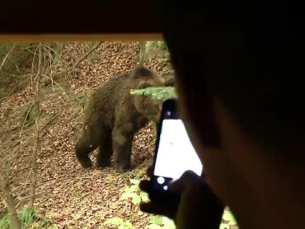 observatoare animale