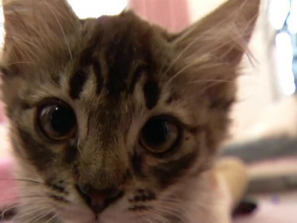 Centru de terapie cu pisici este extrem de popular în Kiev