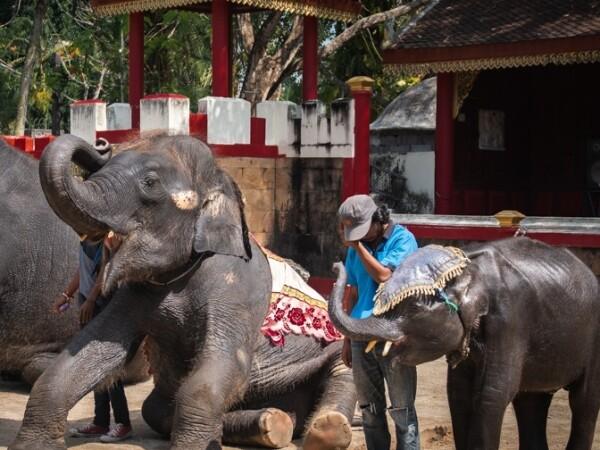 Ce a pățit un elefant forțat să danseze pentru amuzamentul turiștilor. - 1