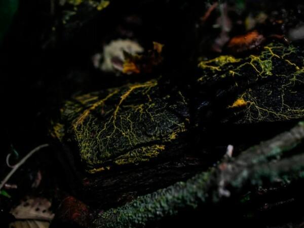 Organism misterios prezentat la o gradină zoo din Paris - 10