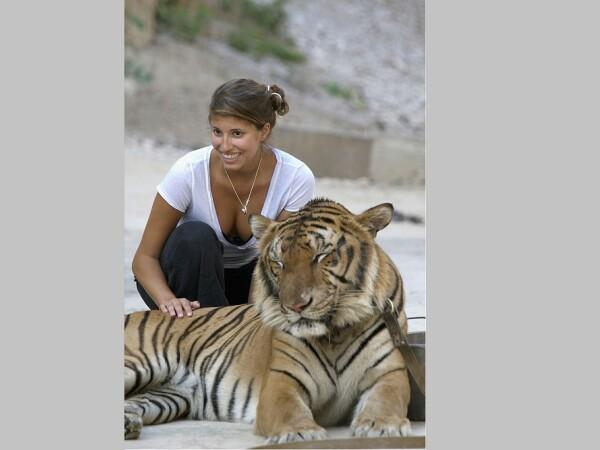 Motivul pentru care peste 80 de tigrii salvaţi dintr-un templu budist au murit