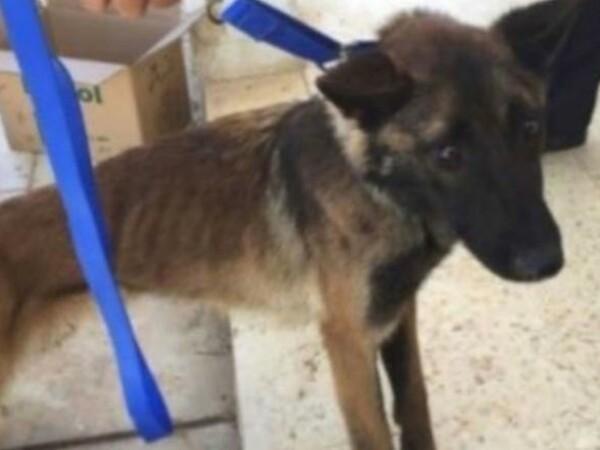 În ce stare au ajuns câinii militari trimiși de SUA în Iordania