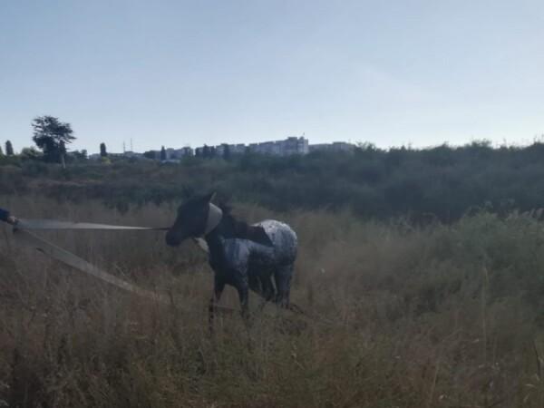 Cal salvat de pompieri la Galați