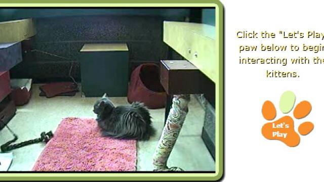 iPet Companion. Te poti juca pe net cu pisici adevarate, LIVE