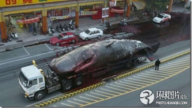 Noi fotografii cu balena de 50 de tone care a explodat in mijlocul orasului. Instantanee incredibile - Imaginea 4