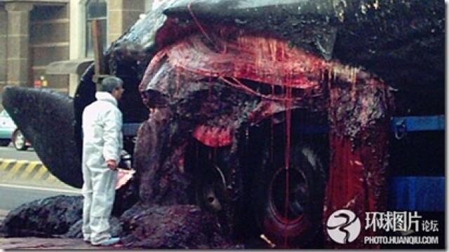 Noi fotografii cu balena de 50 de tone care a explodat in mijlocul orasului. Instantanee incredibile - Imaginea 5