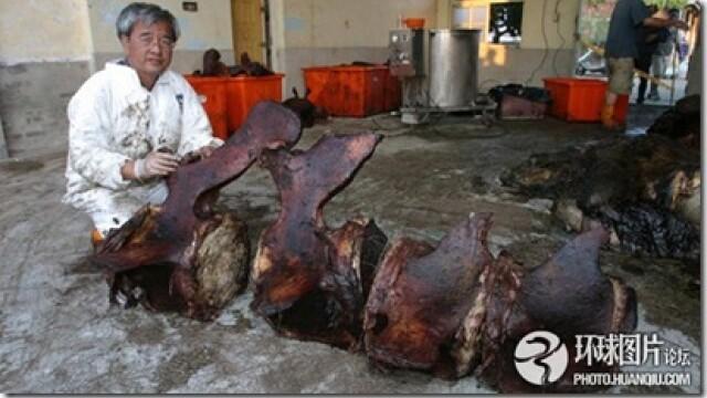 Noi fotografii cu balena de 50 de tone care a explodat in mijlocul orasului. Instantanee incredibile - Imaginea 9
