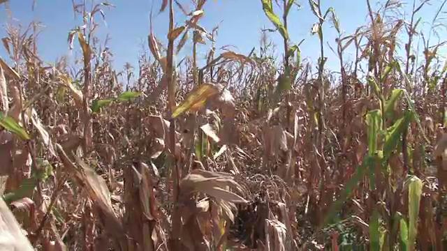 Doar 1% din suprafata agricola a tarii este irigata. Recoltele ar putea fi distruse de seceta