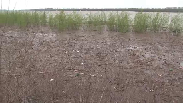 Dunarea, in pragul unui dezastru ecologic. Luciul apei nu se mai vede din cauza deseurilor - Imaginea 3