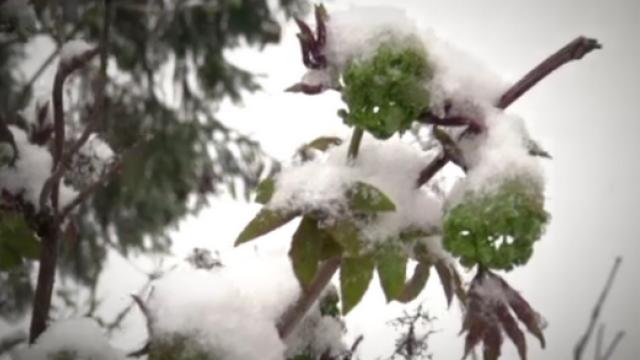 Cu doar cateva zile inainte de Paste, in Romania a nins ca de Craciun. Strat de zapada de 10 cm la Predeal - Imaginea 4