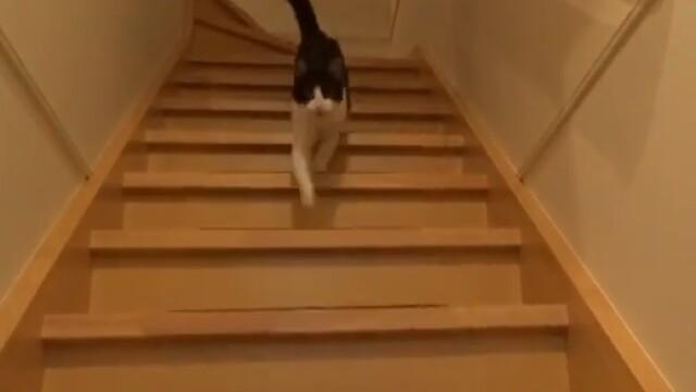 Un VIDEO urmarit de 1,3 milioane de oameni amuzati. Reactia unei pisici cand isi reintalneste stapanul dupa 3 zile