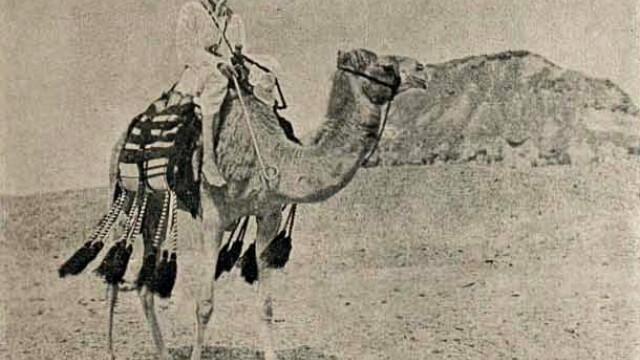 Beduinii de origine romana, in razboi cu parintele contra-terorismului egiptean. Miza: un monument UNESCO - Imaginea 7