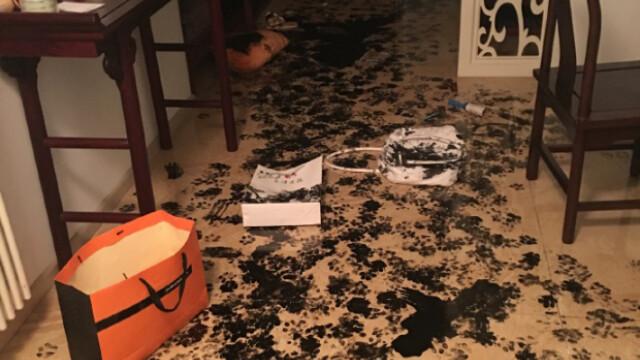 Au lasat cainele timp de trei ore singur acasa si cand s-au intors, au gasit iadul pe pamant. Cum arata acum locuinta - Imaginea 2