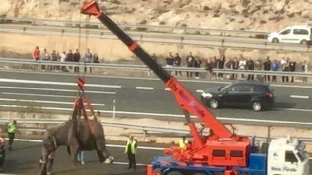 Un camion care transporta elefanţi s-a răsturnat în Spania. Un animal a murit. FOTO și VIDEO