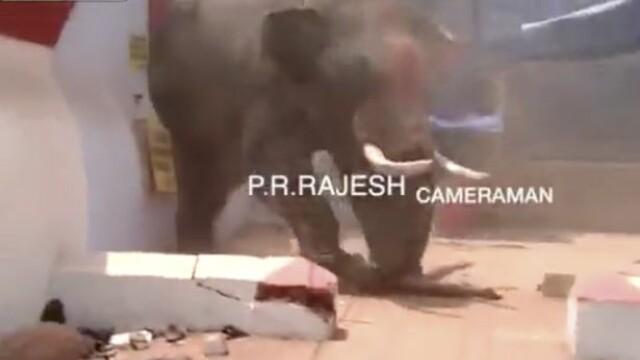 incident elefanti India