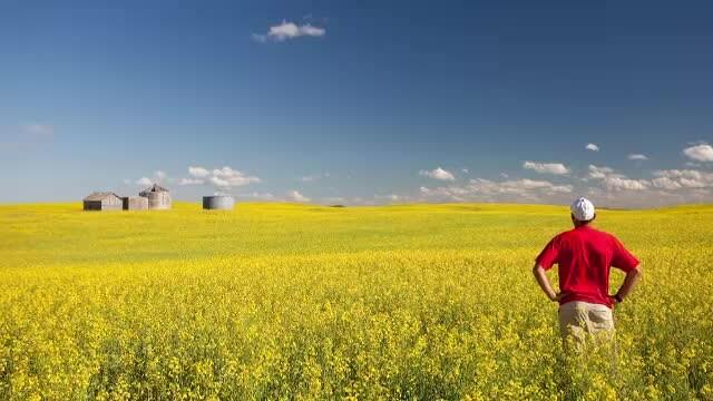 Fermierii se pregătesc iar de profituri mari cu cultura-minune. Au sacrificat grâul pentru ea