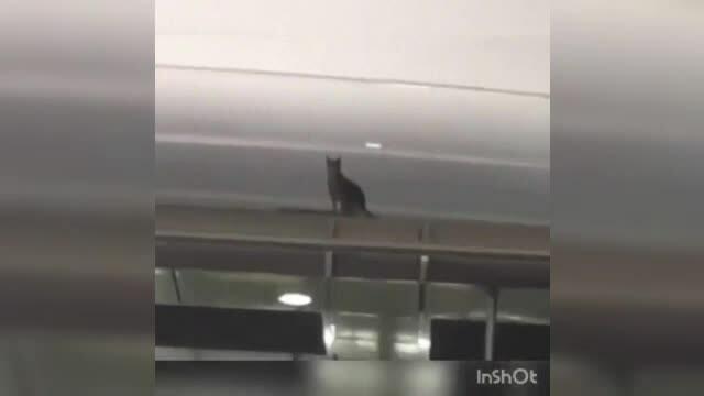 O felină care urma să zboare în China a evadat pe aeroport și a stat ascunsă 8 zile