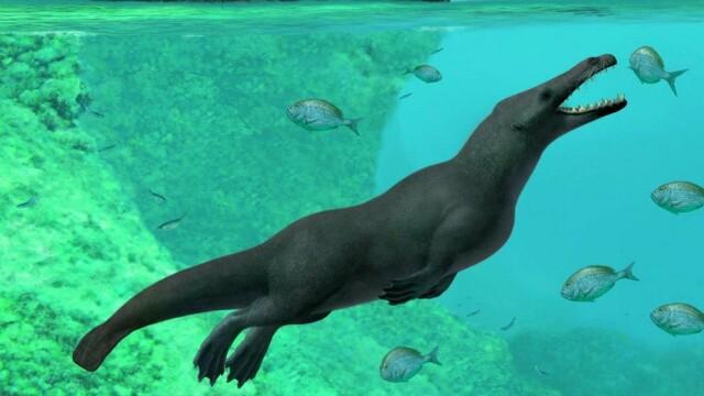 Resturile unei balene cu 4 picioare, găsite în Peru. Cum mergea pe uscat