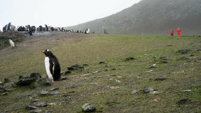 Antarctica ar putea fi verde din nou. Descoperirile care vor schimba regiunea polară - Imaginea 3