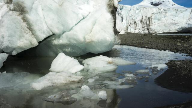 Antarctica ar putea fi verde din nou. Descoperirile care vor schimba regiunea polară - Imaginea 2