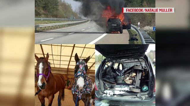 Șofer român de TIR, căutat în Germania. Gestul care l-a transformat în erou - Imaginea 2
