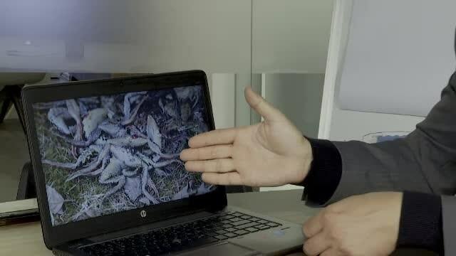 CAMERA ASCUNSĂ. Cum se desfășoară comerțul cu picioare de broască, sub nasul autorităților