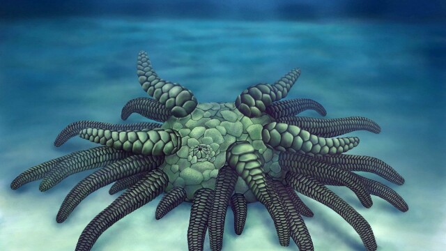 Resturile unui monstru cu nenumărate tentacule, găsite în Anglia. Când ar fi trăit
