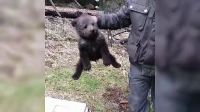 Gestul unor muncitori, după ce au găsit un pui de urs rătăcit de mama lui