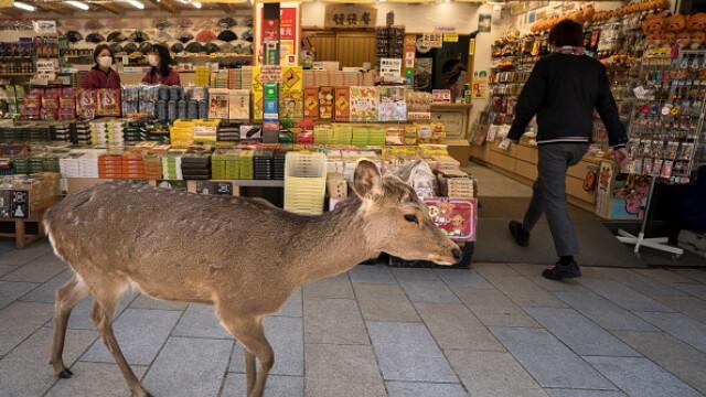 """GALERIE FOTO. Animalele umblă libere pe străzi în """"epoca"""" coronavirusului - Imaginea 12"""